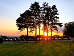 Sonnenstrahlen und unsere Bäume (weilandsteven) Tags: live love bäume arbeit abendstimmung sommer sonne