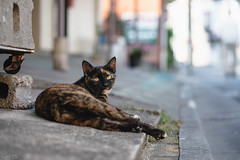 猫 (fumi*23) Tags: street animal cat alley chat sony 85mm gato neko katze ねこ emount ilce7rm3 a7r3 fe85mmf18 sel85f18 dof bokeh 猫 路地 ソニー