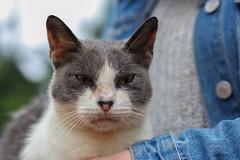 Regalona (Diego_Valdivia) Tags: regalona gato cat parque johnkennedy park miraflores lima peru retrato portrait canon eos 60d