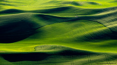 20190608 Id Palouse Ariel-0247 (Dan_Girard_Photography) Tags: 2019 airelphotography green landscape light nature palouse shadow texture yellow