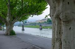 DSC_6776.jpg (Elizabeth Mulshine) Tags: austria salzachriver sycamore tree salzburg