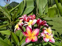 Tahiti, French Polynesia - Huahine