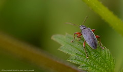 DSC_0163 (Mel Jason Allmark) Tags: brockholes insects bugs weevil froghopper