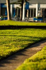 The lawn (.Stephen..Brennan.) Tags: fa77 fremantle pentax pentaxk3 perth westernaustralia australia