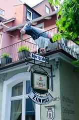 DSC_7372.jpg (Elizabeth Mulshine) Tags: lindau germany biketour cow
