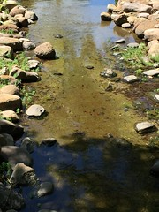 Turtles in Stream (zombiespammer) Tags: houston texas turtle nature wildlife