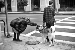 Petting (ROSS HONG KONG) Tags: dog pet petting walk street streetphoto losangeles la downtown black white blackandwhite noir blanc bw leica monochrom noctilux monochrome 50mm 095
