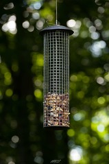 Lone Food #nature (michaelsabol4) Tags: nature woodpecker bokeh connecticut nuts bird wow photography spring nikon