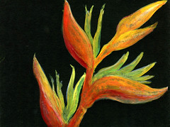 Bird of Paradise (Life Imitates Doodles) Tags: birdofparadise gouache blackpaper