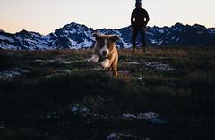 Buckhorn Pass (gmolteni) Tags: washington pnw mountains mountain dog puppy national park nps olympics