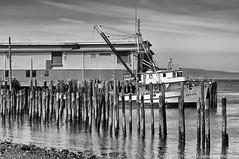 2019-06-16 F/V Oregon (B&W) (1024x680) (-jon) Tags: anacortes skagitcounty skagit washingtonstate washington salishsea fidalgoisland sanjuanislands pugetsound guemeschannel dock pier boat ship vessel fvoregon tridentseafoods bw blackandwhite pilings ruins decay decayed forgotten abandoned a266122photographyproduction canonpowershotelph180 canon powershot elph180