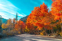 Eastern Sierra Fall Foliage California Fall Color! North Lake Bishop Creek Clouds! High Sierra Autumn Aspens Red Orange Yellow Green Leaves! Sony A7R II & Sony FE 24-240mm f/3.5-6.3 OSS Lens SEL24240! Elliot McGucken California Fine Art Landscape & Nature (45SURF Hero's Odyssey Mythology Landscapes & Godde) Tags: eastern sierra fall foliage california color north lake bishop creek clouds high autumn aspens red orange yellow green leaves sony a7r ii fe 24240mm f3563 oss lens sel24240 elliot mcgucken fine art landscape nature