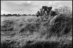 El paraje mexicano. (Taly Tatsy) Tags: nikomat kodak trix400 analog film filphotography 35mm blackandwhite bw nikon mexico