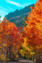 Eastern Sierra Fall Foliage California Fall Color! North Lake Bishop Creek Clouds! High Sierra Autumn Aspens Red Orange Yellow Green Leaves! Sony A7R II & Sony FE 24-240mm f/3.5-6.3 OSS Lens SEL24240! Elliot McGucken California Fine Art Landscape & Nature (45SURF Hero's Odyssey Mythology Landscapes & Godde) Tags: california autumn red lake color fall clouds creek high north sierra foliage aspens eastern bishop orange green art nature leaves yellow lens landscape sony fine ii fe elliot oss mcgucken f3563 a7r 24240mm sel24240