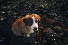 Buckhorn Pass (gmolteni) Tags: washington pnw mountains mountain dog puppy portrait national park nps olympics