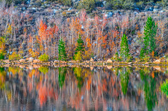 North Lake Autumn Aspen Reflections! Eastern Sierra Fall Foliage California Fall Color! North Lake Bishop Creek Clouds! High Sierra Autumn Aspens Red Orange Yellow Green Leaves! Sony A7R II & Sony FE 24-240mm f/3.5-6.3 OSS Lens SEL24240! Elliot McGucken (45SURF Hero's Odyssey Mythology Landscapes & Godde) Tags: eastern sierra fall foliage california color north lake bishop creek clouds high autumn aspens red orange yellow green leaves sony a7r ii fe 24240mm f3563 oss lens sel24240 elliot mcgucken fine art landscape nature