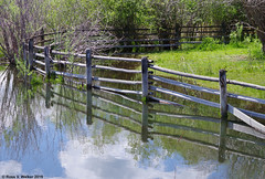 Spring Runoff (walkerross42) Tags: flood water creek stream stcharlescreek idaho fence reflection bearlakevalley spring corral