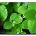 Drops & morning dews.