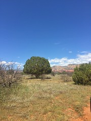 A tree alone (navah.w) Tags: april2019 pesach arizona photography