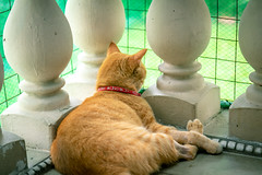 A penny for your thoughts... 💭 (stratman² (Joey's finally home)) Tags: canonphotography eos7dmarkii efs1755mmf28isusm littlejoey kitteh catmoments chat kucing