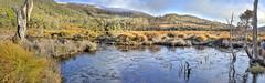 Morning panorama, Mt Field (Tindo2 - Tim Rudman) Tags: nationalpark mountfield camera:model=canoneosr geolocation camera:make=canon exif:make=canon geostate exif:focallength=24mm exif:lens=tse24mmf35lii exif:isospeed=400 exif:model=canoneosr panorama ice landscape frozen pond australia tasmania buttongrass