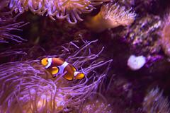 2018-01-09_Sydney-0829 (art.annali) Tags: sydney australia 2018 aquarium