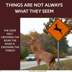 Things are not always what they seem Deers (halecraze) Tags: thing are not always what they seems deer forest fitness facts your dont know