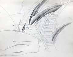 Pencil sketch of knees, Agave and lizard (elizabatz.jensen) Tags: agave plant pencil sketch knees lizard
