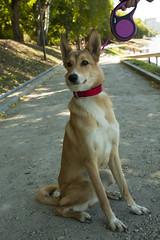 IMG_316077 (Anna-Kara) Tags: dog hund कुत्ता kutta