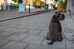 Dog // Trip to Sweden (Merlijn Hoek) Tags: sweden zweden stockholm trip holliday vacation