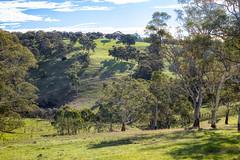 X marks the spot (cheezepleaze) Tags: adelaide southaustralia adelaidehills farm trees autumn light spotthehorses