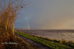 The end of the Rainbow! (Mia Pedaltoes) Tags: trees crow perched light path puddles mud grass rainbow mudflats tidalflats baitdigger digging landscape nature outdoors