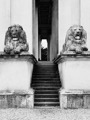 Fitzwilliam Museum (davepickettphotographer) Tags: fitzwilliammuseum uk cambridgeshire cambridgeuniversity trumpington street art museum museums east england eastanglia eastern university lions statutes