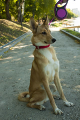 IMG_316175 (Anna-Kara) Tags: dog hund कुत्ता kutta