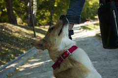 IMG_315574 (Anna-Kara) Tags: dog hund कुत्ता kutta