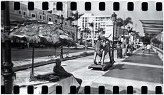 Lomography (Samy Collazo) Tags: lomography lomo holga120s holga aristaedu100fomapan kodakd76 sanjuan oldsanjuan viejosanjuan puertorico bn bw niksilverefexpro2 lightroom3