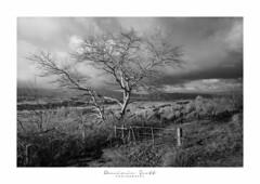 Winter Tree (Dominic Scott Photography) Tags: dominicscott newzealand pohangina valley manawatu blackandwhite monotone tree sony ilce7rm3 sel1635gm gmaster