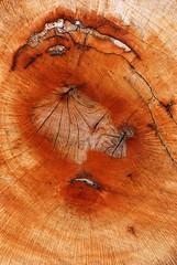 HMN.324 (ViTóRiO...) Tags: projectohmn vítorcardoso vitório nespereira cinfães vilachã nikond80 nikon sériedesenhosdasárvores textura abstracto minimalista aoarlivre