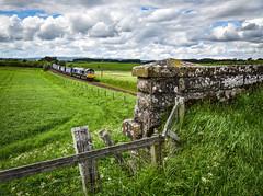 66302 near Gleneagles (robmcrorie) Tags: 66302 tesco intermodal boxes aberdeen gleneagles scotland nikon d850 1z10