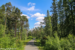 Skageskogen (2000stargazer) Tags: skageskogen grimseid bergen norway forest trees green summer landscape nature cloudscape canon getty
