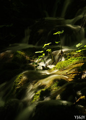 This little light of mine (YJ&JY) Tags: plitvice lake upper lakes waterfall plant focus sunrays light shine canon 70d river landscape