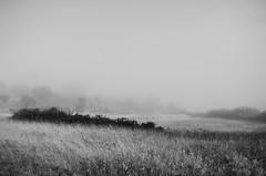 Mist... (Capturedbyhunter) Tags: fernando caçador marques fajarda coruche ribatejo santarém portugal pentax k5 smc m 2435 f35 landscape paisagem monocromático monochrome preto e branco black white pentaxart manual focus focagem foco