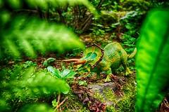 Triceratops (mmbottrop) Tags: pentax k3 sigma 1020 vogelbeckendinosauriern triceratops ceratopsia farn grasen grün dino dinosaurier natur pflanzenfresser ausgestorben fern graze green dinosaur nature herbivore extinct fougère écorchure vert dinosaure éteint helecho abrasión verde dinosaurio naturaleza herbívoro extinguido felce pascolare dinosauro natura erbivoro estinto historic