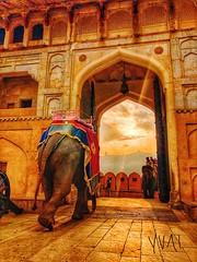 #Travel #india #jaipur #sunset #savetheelephant (watsonchain2194) Tags: travel india jaipur sunset savetheelephant