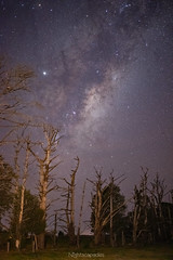 Rise above the dead wood (nightscapades) Tags: astronomy astrophotography bolong galacticcore milkyway night nightscapes nowra pyree shoalhaven sky southcoastnsw stars newsouthwales australia