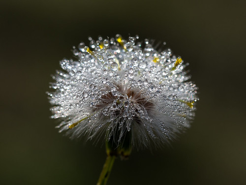 under dew
