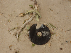 Black CD on Sand (mikecogh) Tags: tennyson cd sound round circular context leaves stilllife