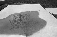 FRB No. 49 - Lomography Potsdam 100 - Roll No. 1 (Kodak D-76) (Alex Luyckx) Tags: oakville ontario canada sheridan sheridancollege college campus trafalgarroadcampus mccraney mccraneyvalleypark valley creek train park greenspace filmreviewblog filmreview review media medium nikon fa nikonfa 135 35mm slr aisnikkor35mm128 lomography kino lomographypotsdam100 potsdam100 filmotech orwo orwoun54 un54 asa100 kodak d76 kodakd76 11 bw blackwhite nikoncoolscanved adobephotoshopcc film filmphotography believeinfilm filmisalive filmisnotdead