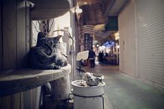 Untitled (easyroute) Tags: 201906 那覇 動物 沖縄 夜 2019 アーケード ricohgriii カラー 猫 untitled cat color gr gr3 grd griii japan naha nahacity night okinawa ricoh ricohgr3 リコーgr3 リコーgriii