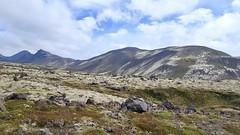 Lingdalsheiði (skolavellir12) Tags: lava iceland moss lyndalsheiði